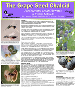 Grape Seed Chalcid Poster Thumbnail